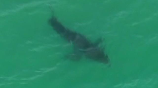 dnt broun aus shark cull_00003811.jpg