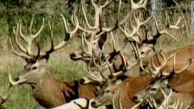 newday dnt deer antler sanjay gupta_00002230.jpg