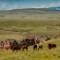 crow fair rodeo reservation landscape