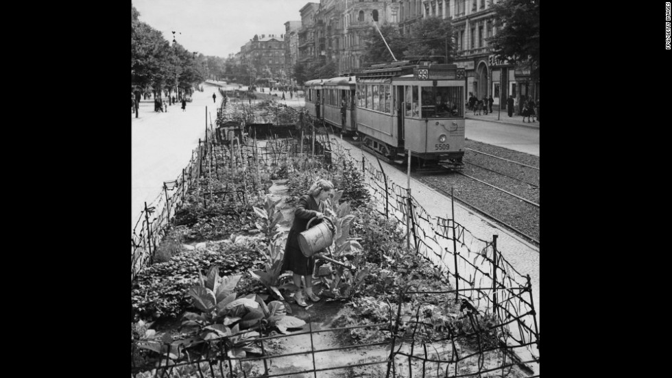 As the Soviets constrict the supply routes into Berlin during the Berlin Blockade, the residents react by growing their own vegetables and tobacco in allotments on the Berliner Strasse, as seen here in July 1948.
