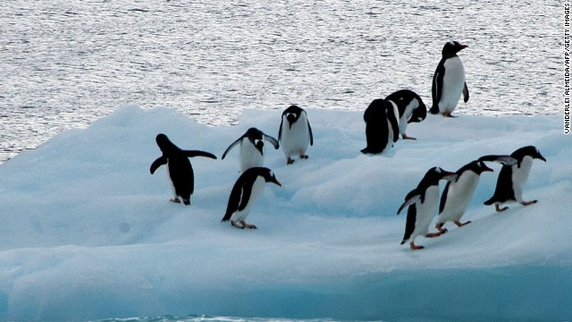 Penguins on an ice block in Antarctica.