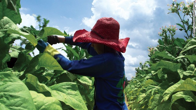 Tobacco fields no place for kids