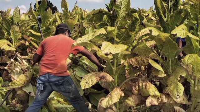 nr intv whitfield margaret wurth kids tobacco farms_00010424.jpg