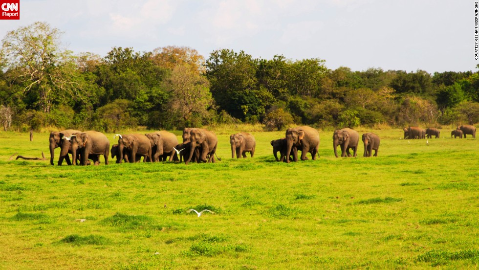 "Sri Lanka's <a href=""http://203.143.23.34/library/Np_minneriya.html"" target=""_blank"">Minneriya National Park</a> was originally a wildlife sanctuary. During the dry season, elephants are attracted to the park's grass fields. Besides elephants, which <a href=""http://ireport.cnn.com/docs/DOC-1127832"">Geshan Weerasinghe</a> says are the biggest highlights of the park, visitors can also see deers, bears, peacocks, birds and buffaloes."