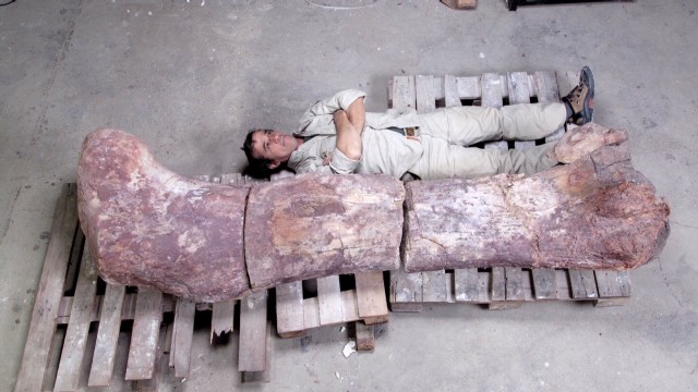 Giant fossilized dinosaur discovered