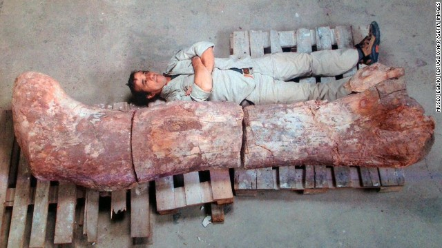 Newly discovered fossil is biggest ever