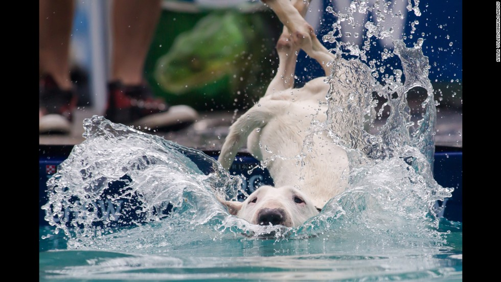 A dog jumps into the water during a dog diving competition in Budapest, Hungary, on Sunday, May 18.
