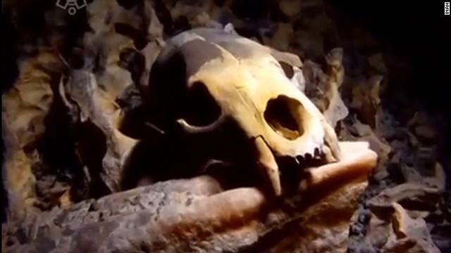 pkg parker mexico human skeleton_00010311.jpg
