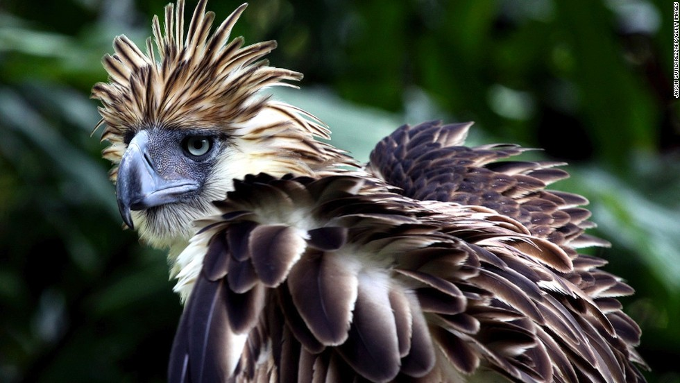 Davao City's Philippine Eagle Center gets you close to the country's national bird.