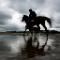 laytown races horse silhouettes