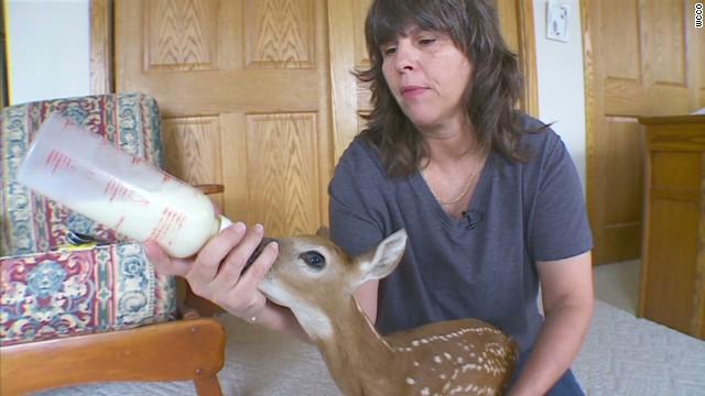 pkg fawn survives after mom deer hti by car_00000607.jpg