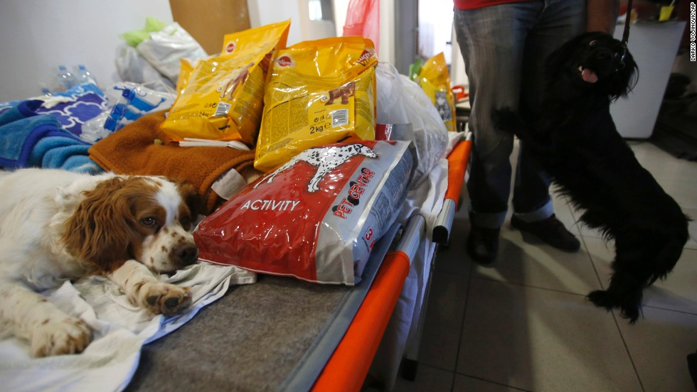 Dogs from the flood-hit town of Obrenovac stay in a shelter in Belgrade, Serbia, on May 22.