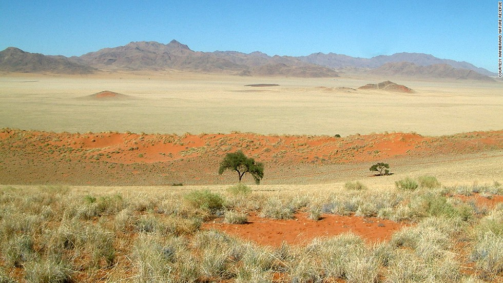 In arid climates, where water is scarce and soil nutrient-poor, plants face stiffer competition for resources. As a result, they 'organize' themselves at a distance to maximize what limited resources are available --ultimately forming strongly ordered patterns on the landscape.