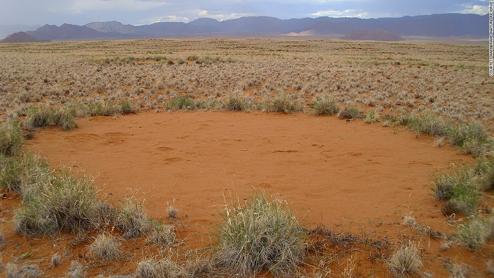 Sand termites kill vegetation creating bare patches, which are evenly spaced in a hexagonal formation reflecting territorial battles with neighboring colonies. In doing so the earth accumulates more water.