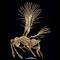 08 new species 2014