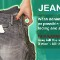 wash gallery jeans