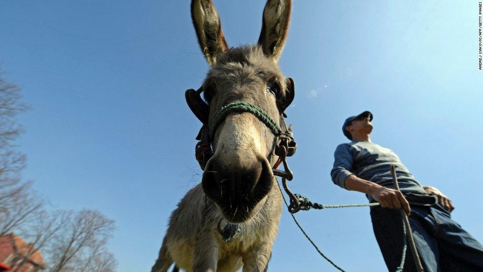 About 25 liters are required to make just one kilogram of donkey cheese. That means the white, crumbly pule is both limited and costly. Currently it goes for about €1,000 a kilo, or $576 a pound.
