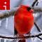 cardinal.irpt