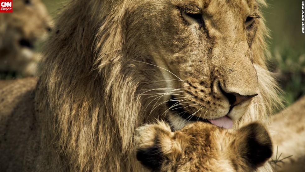 "It's bath time for one <a href=""http://ireport.cnn.com/docs/DOC-653311"">lion cub</a> in Kenya's Masai Mara National Reserve."