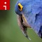 parrot.irpt