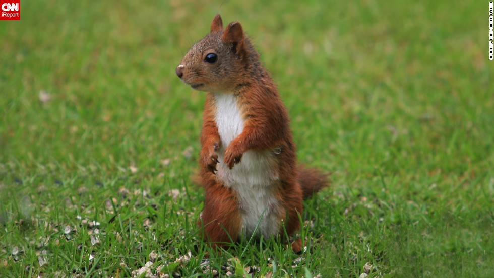 "This little <a href=""http://ireport.cnn.com/docs/DOC-1135778"">squirrel</a> lives in Atraa, Norway."