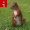 squirrel.irpt