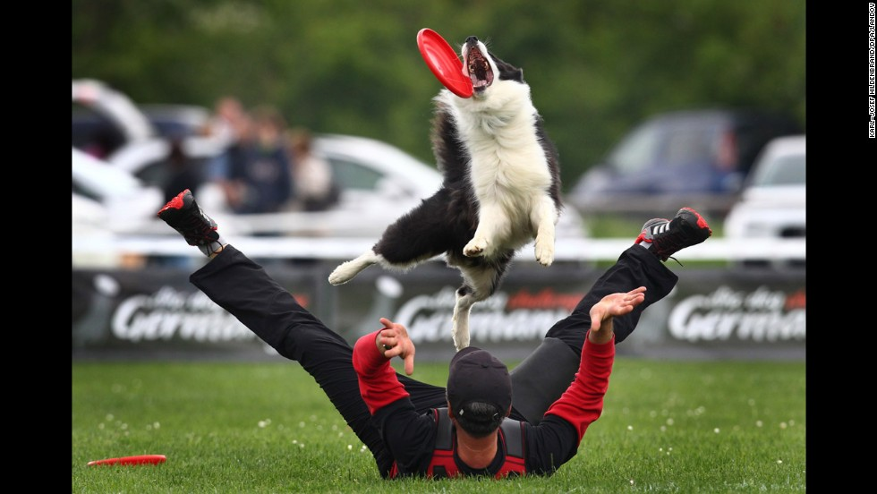 A dog catches a flying disc during the Disc Dog Challenge event Saturday, May 24, in Pforzen, Germany.