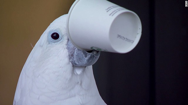 See what this parrot loves to drink