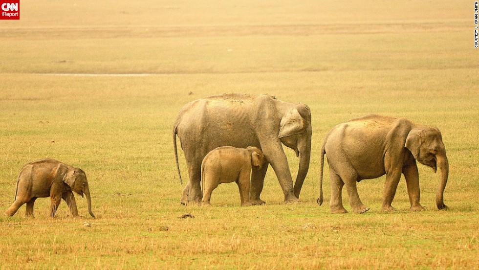 "<a href=""http://ireport.cnn.com/docs/DOC-768765"">Elephants</a> graze on the savannas of India."