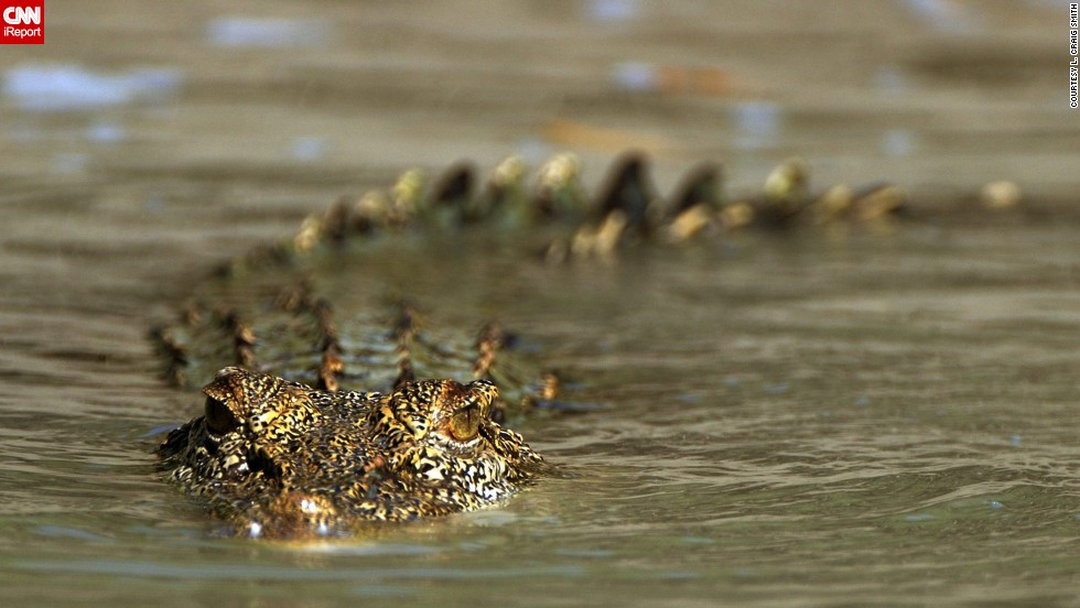 "A <a href=""http://ireport.cnn.com/docs/DOC-1124466"">salt water crocodile</a> slithers through the waters of western Australia."