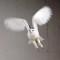 03 snowy owl release
