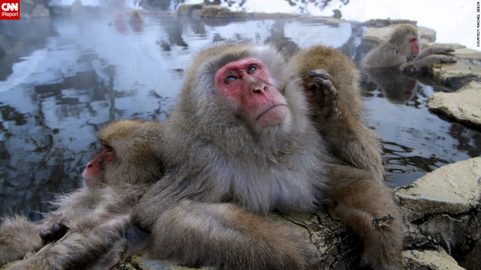 "Who knows what this <a href=""http://ireport.cnn.com/docs/DOC-850858"">snow monkey</a> is pondering as he relaxes in a hot spring near Nagano, Japan."