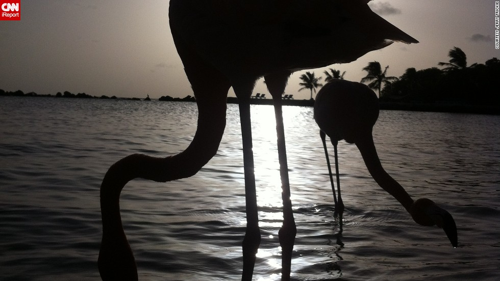 "In Aruba, two <a href=""http://ireport.cnn.com/docs/DOC-823580"">flamingos</a> are silhouetted on the beach at sunset."