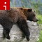 sleeping bear irpt