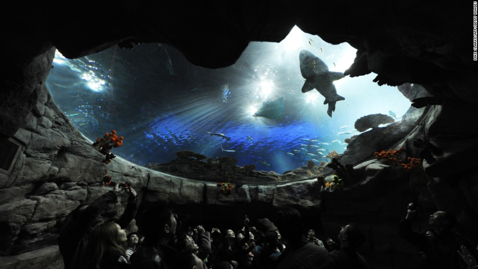12. Ocean Park in Hong Kong has been criticized for how it treats its marine life, much like SeaWorld, but visitors keep coming to the park.