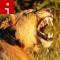 lion roar yawn irpt