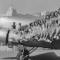 DC-3 1937