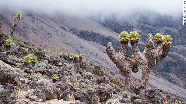 Kilimanjaro has five ecosystems, from moorland to arctic-like conditions.