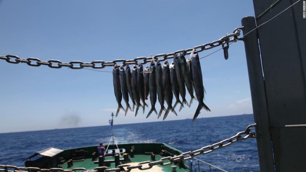Fish dry in the hot sun aboard the Coast Guard vessel.