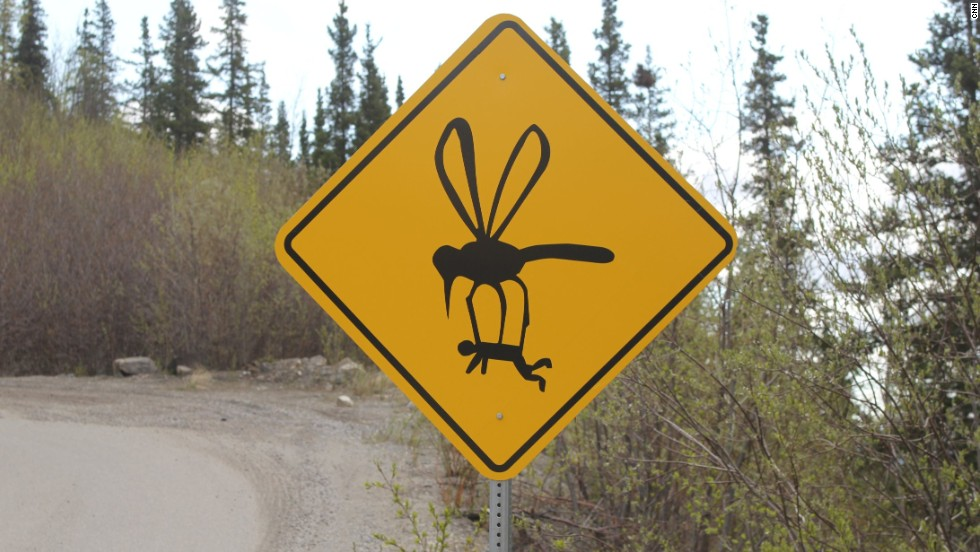 Humorous signage along steep, winding Grande Drive in Denali, Alaska, is meant to get a laugh out of drivers. And keep them focused on the cliff-laden road. Massive mosquitoes are a (normally) not-so-funny feature of the Alaskan wilderness.