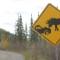 Grande Avenue moose