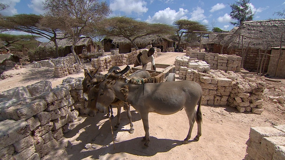 Donkeys also  help transport one of the island's main commodities: coral stone.