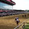 california chrome preakness stakes
