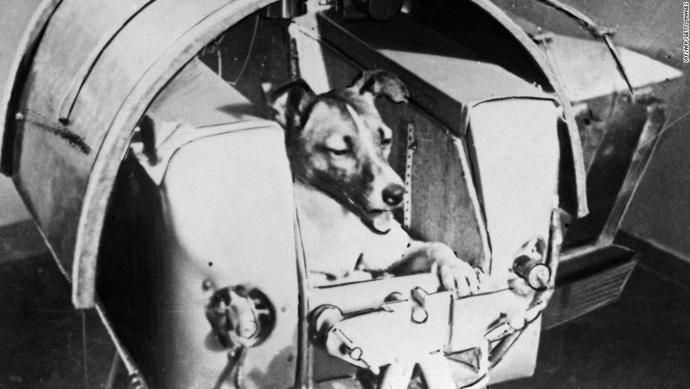 Laika the dog is pictured aboard Sputnik II on November 13, 1957. She was the first animal to orbit the Earth. She did not survive her trip, but the mission provided valuable data that paved the way for the first human in space.