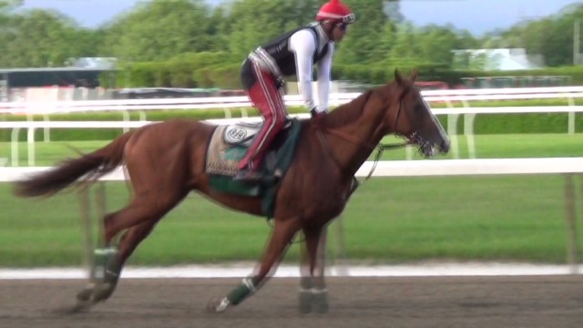 California Chrome_00001416.jpg