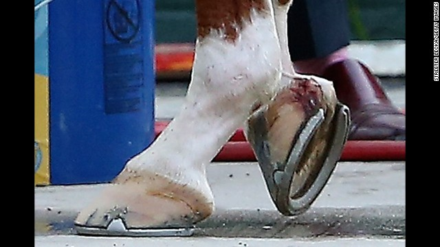 An injury to California Chrome's right front hoof gets treated Saturday at Belmont Park in Elmont, New York.