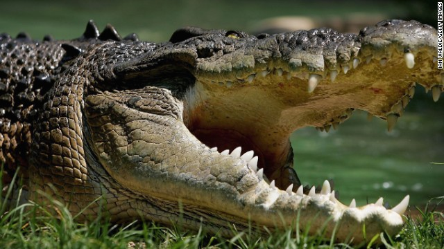 Human remains found inside a crocodile