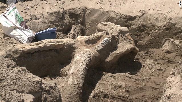 pkg stegomastodon fossil discovered new mexico_00002423.jpg