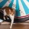cat cafes-Lady Dinah's Cat Emporium