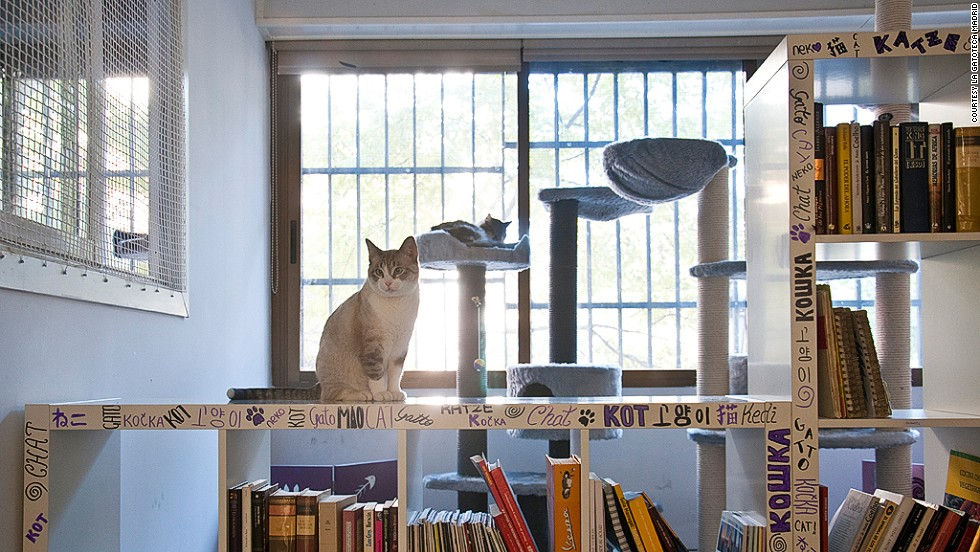 Cat cafes provide a place for people who don't own animals to enjoy a quiet hour with them. La Gatoteca in Madrid has proved popular since opening last year.